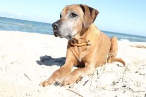 Jabali genießt die Tage am Strand so richtig